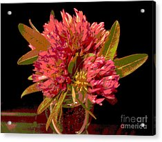 Red Clover 1 Acrylic Print by Martin Howard