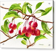 Red Crab Apples Acrylic Print by Sharon Freeman