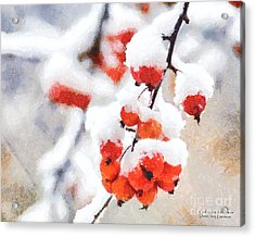 Red Crabapples In The Winter Snow - A Digital Painting By D Perry Lawrence Acrylic Print