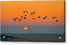 Red-crowned Crane Acrylic Print