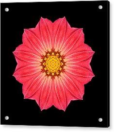 Red Dahlia Hybrid I Flower Mandala Acrylic Print by David J Bookbinder