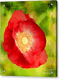 RED Acrylic Print by Darren Fisher