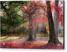 Red Dawn Acrylic Print by Bill Wakeley