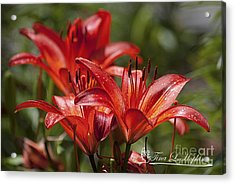 Red Day Lily 20120615_64a Acrylic Print