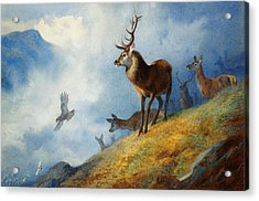 Red Deer Watching A Golden Eagle Hunt Acrylic Print