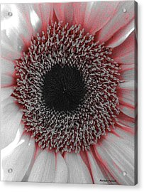 Red Delight Acrylic Print
