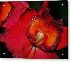 Red Depth Acrylic Print by Liudmila Di
