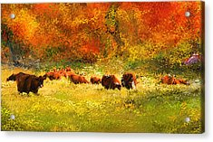 Red Devon Cattle In Autumn -cattle Grazing Acrylic Print by Lourry Legarde