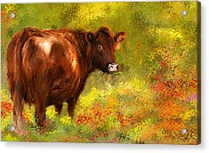 Red Devon Cattle - Red Devon Cattle In A Farm Scene- Cow Art Acrylic Print by Lourry Legarde