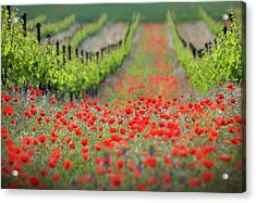 Red District Acrylic Print by Ales Komovec