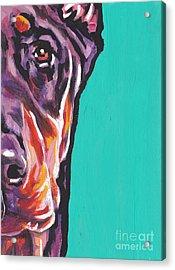 Red Dobie Man Acrylic Print