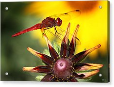 Red Dragonfly Acrylic Print by Martina  Rathgens