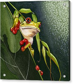 Red-eyed Frog Acrylic Print by Lyse Anthony