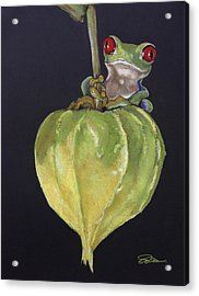 Red-eyed Tree Frog On Seed Pod Acrylic Print