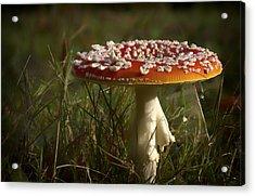 Red Fairy Mushroom Acrylic Print by Shirley Mitchell