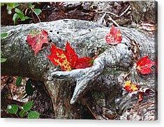 Red Fall Against Grey Acrylic Print