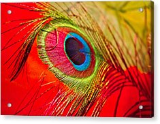Red Feather Acrylic Print by Adria Trail
