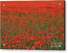 Red Field Acrylic Print