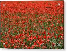 Red Field Acrylic Print by Simona Ghidini