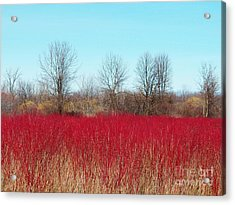 Red Fields Acrylic Print by Judy Via-Wolff