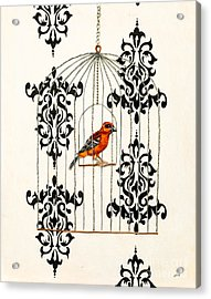 Red Finch Acrylic Print by Stefanie Forck