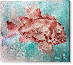Red Fish Acrylic Print by Jasna Dragun