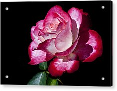 Acrylic Print featuring the photograph Red Flame by Doug Norkum