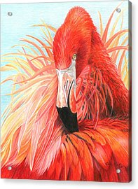 Red Flamingo Acrylic Print