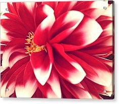 Red Flower Acrylic Print by Beril Sirmacek