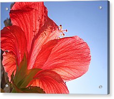 Red Flower In The Sun By Jan Marvin Studios Acrylic Print