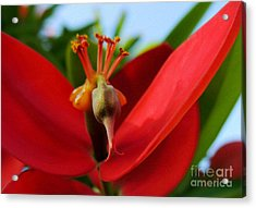 Acrylic Print featuring the photograph Red Flower by Kristine Merc