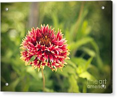 Acrylic Print featuring the photograph Red Flower by Mohamed Elkhamisy