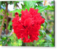 Red Flower Acrylic Print by Sergey Lukashin