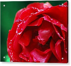 Acrylic Print featuring the photograph Red Flower Wet by Matt Harang
