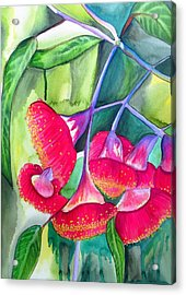 Red Flowering Gumnuts Acrylic Print by Sacha Grossel