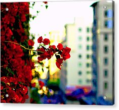 Acrylic Print featuring the photograph Red Flowers Downtown by Matt Harang