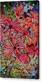 Red Flowers Acrylic Print by Karen Newell