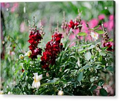 Red Flowers On Film Acrylic Print by Linda Unger