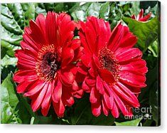 Acrylic Print featuring the photograph Red Flowers by Rose Wang