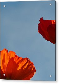Red Flowers Acrylic Print by Stuart Hicks