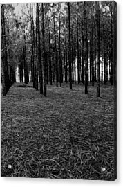 Red Forest In Black And White Acrylic Print