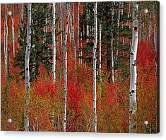 Red Forest Acrylic Print by Leland D Howard