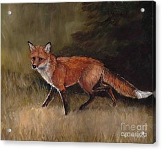 Red Fox Acrylic Print by Charlotte Yealey