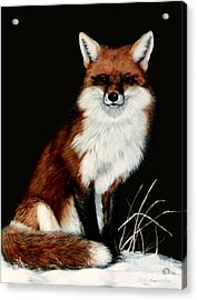 Red Fox Acrylic Print