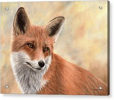 Red Fox Painting Acrylic Print by Rachel Stribbling