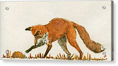 Red Fox Playing Acrylic Print