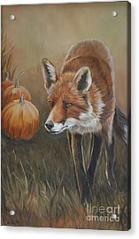 Red Fox With Pumpkins Acrylic Print by Charlotte Yealey