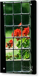 Red Geranium Through Leaded Window Acrylic Print
