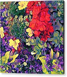 Red Geranium With Yellow And Purple Flowers - Square Acrylic Print