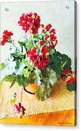 Red Geraniums Acrylic Print